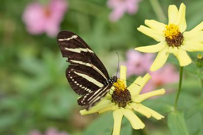 Aug 16 Beautiful Butterflies