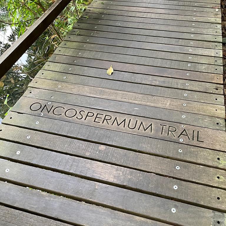 Oncospermum Trail