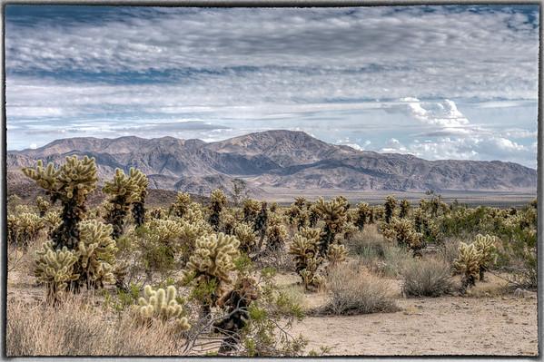 Hiking Near Palm Springs