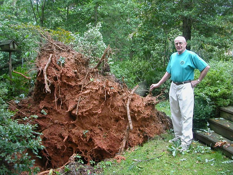 This is in the back yard of Ev Grenke, who lives across the street from the oak that hit the cars.  He had two big oaks uproot.