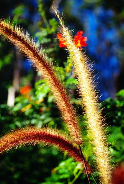 Grass, at the Wild Animal Park, Escondido, California.