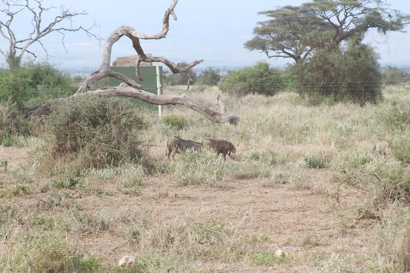Kenya 2019 #2 715.JPG