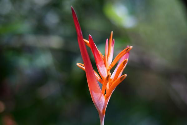 Botanical Gardens (Sony a7R and Voigtlander 75mm f/1.8 Heliar) :  July 19, 2014