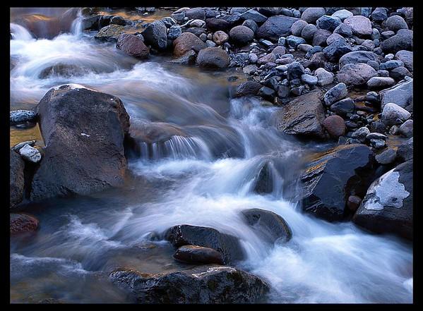 Wild Cascadia, Washington