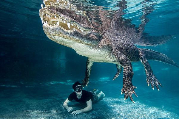 Underwater Gator Tours
