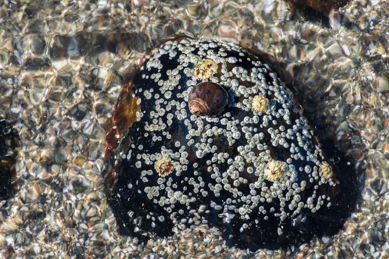 Rocks-beach-seaweed2.jpg