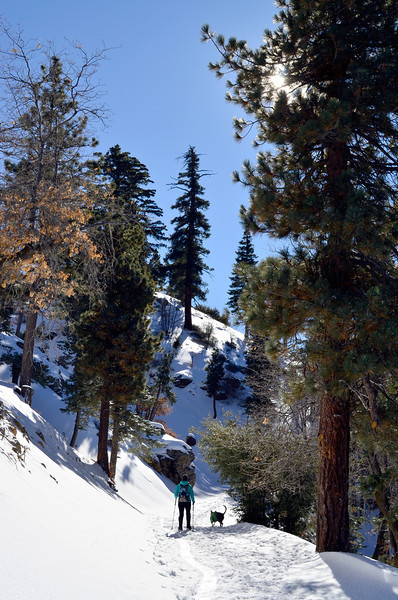 6_bigbear_snowshoeing_onthetrail.jpg