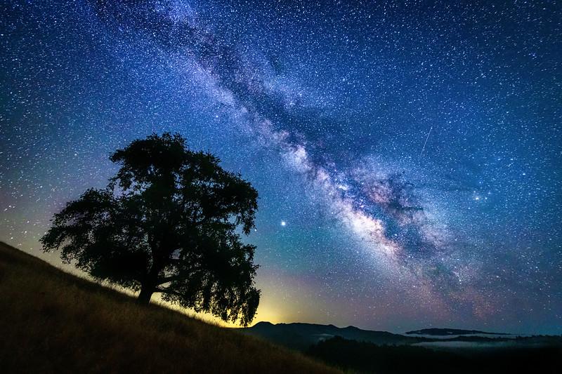 Hillside oak & Milky Way, Study 2, Sonoma County