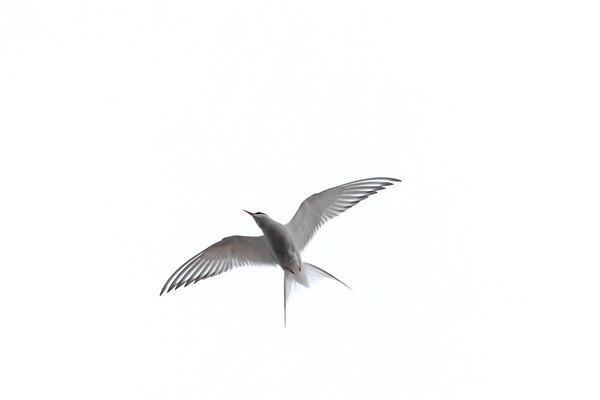 Fågelliv