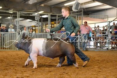 Hog Ringshots - Class 5, 6, & 7