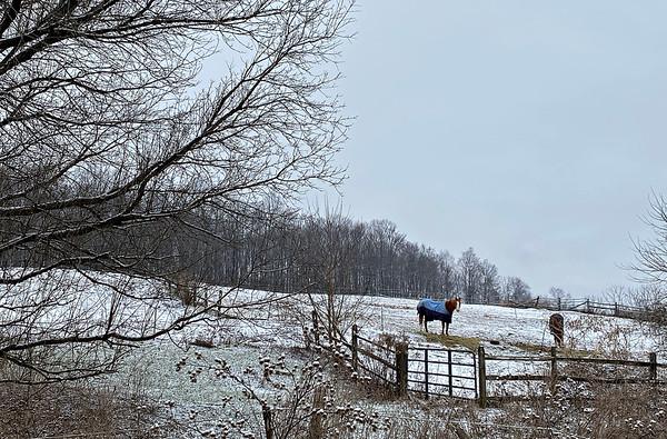 Horses in North Bennington - 011221