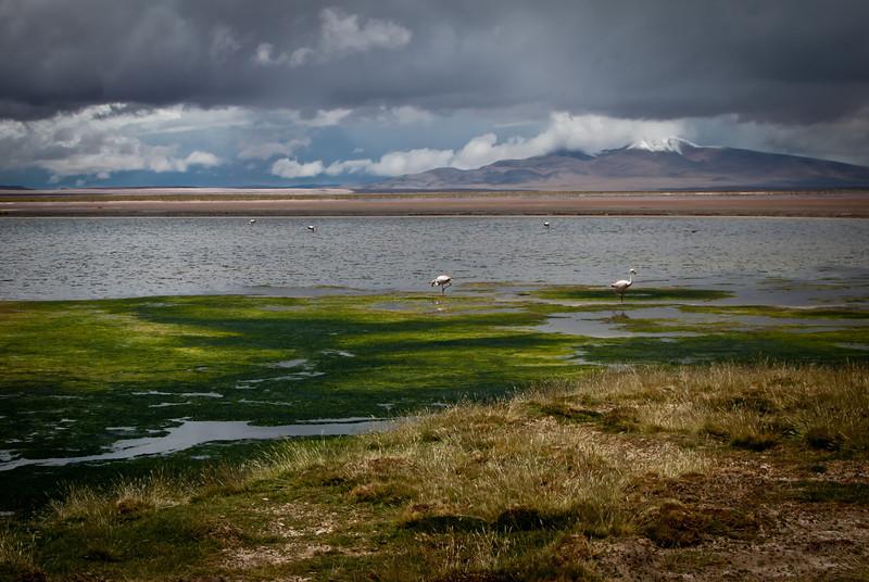 Atacama 201202 Salar de Tara (197).jpg