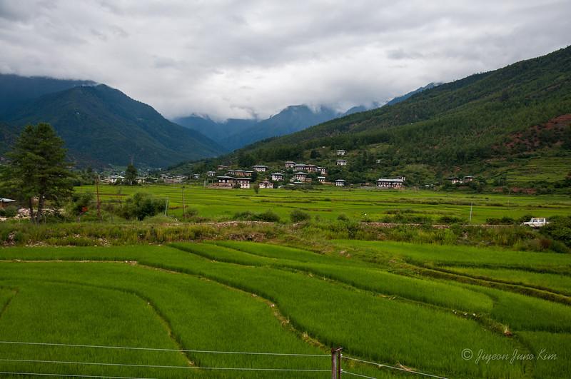 Rice paddies at the farm house