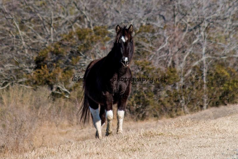 2017 Pony Spotting