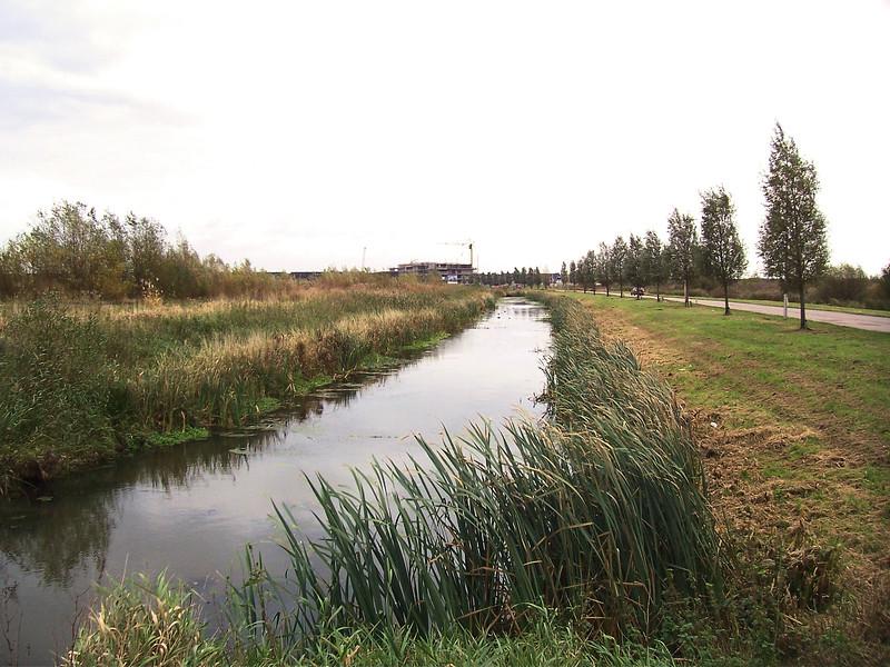 riet mag blijven staan (Jelle) 7 november 2007 schouw Alphen ad Rijn 022.jpg