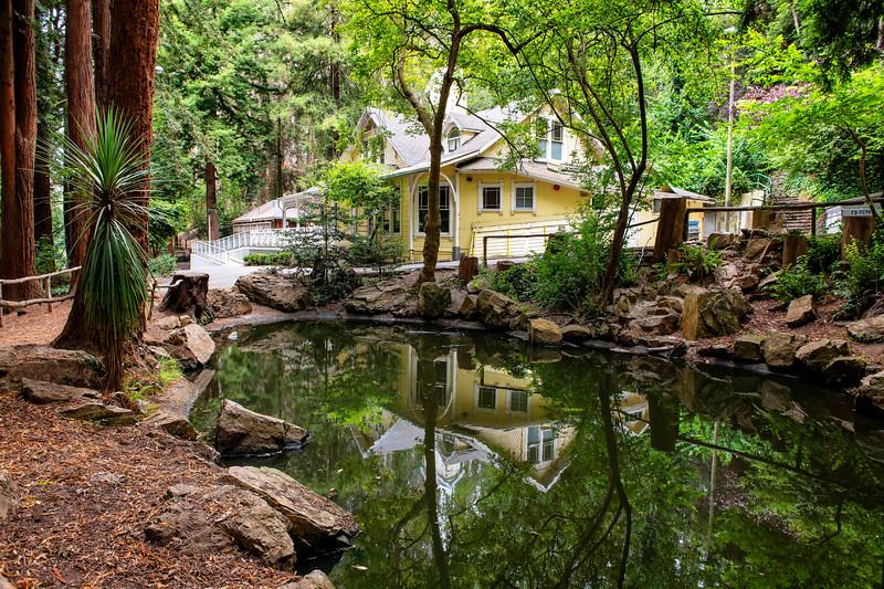 Sigmund Stern Grove and Pine Lake