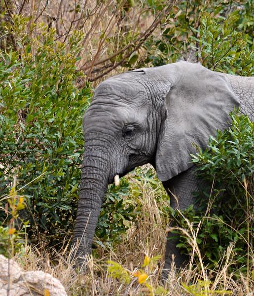 Elephants_Kruger-2.jpg