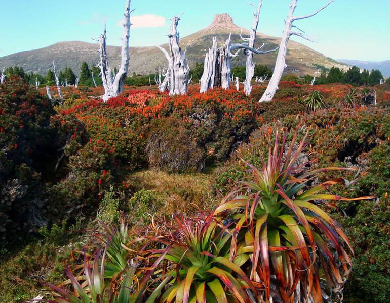 The Mt Doris plateau, roughly half way up, was covered in wildflowers.