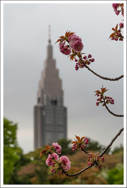 Shinjuku Gyoen-4318.jpg