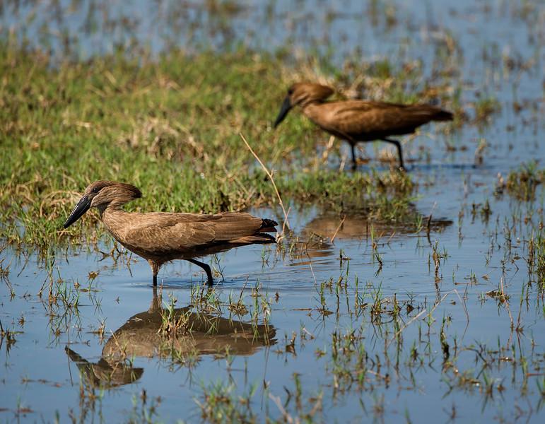 2014-08Aug-Okavango Masters-35-Edit.jpg