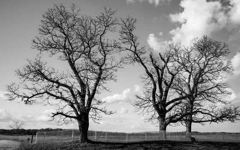 EmmittsburgTrees (1 of 1).jpg