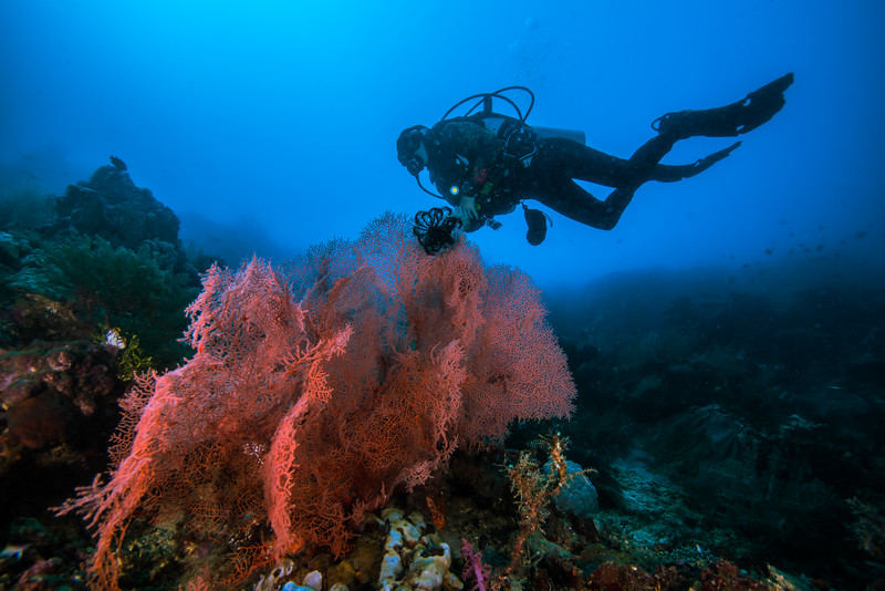 Taken at Reef Jojo divesite in Jailolo Island, North Maluku, Indonesia during our 8D7N excursion in March 2018