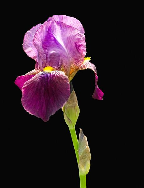 Spring Flowers (9 of 37)-Edit-Edit.jpg