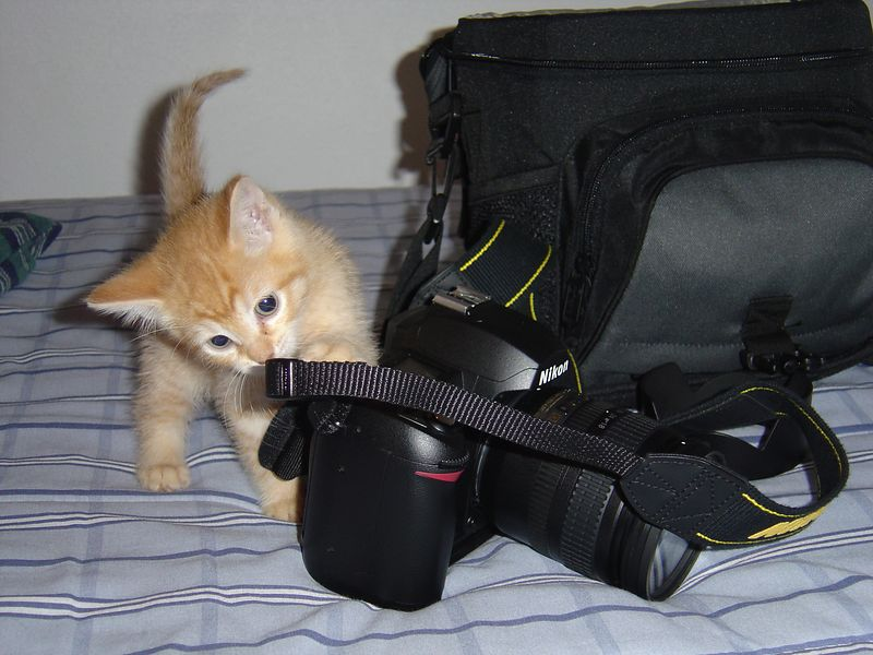 I think he has an interest in photography too.