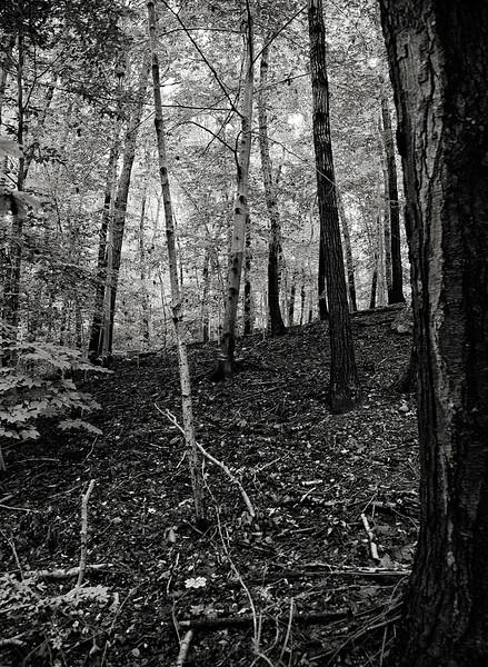 japanese-forest.jpg
