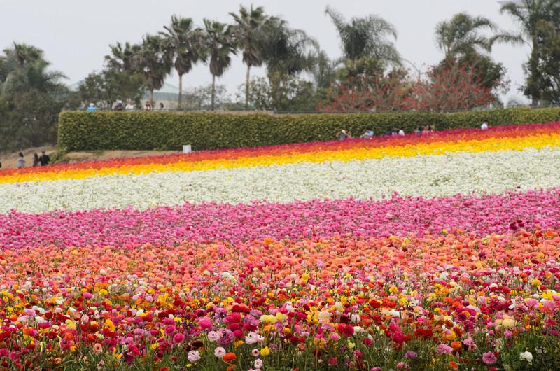 130428_002_FlowerField.jpg