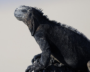 Galapagos Islands 05/18/2011