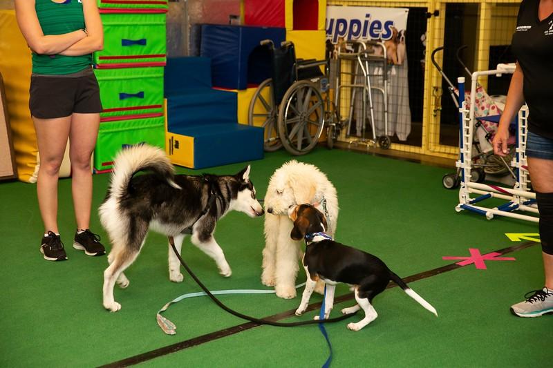 on Command dog Training June 2019-5167.jpg