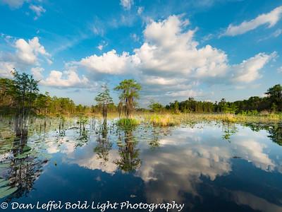 Georgia - Swamps