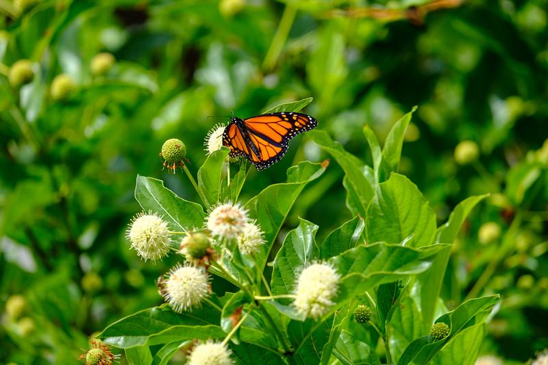 20180909 Coastal Maine Botanical Garden 033.jpg