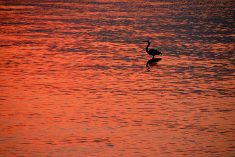 sunset on the bay 2.jpg