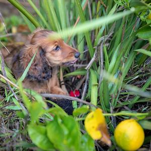 Zenith's Puppies
