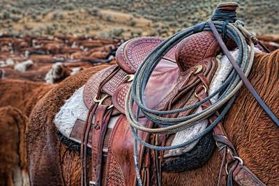 saddles&gear