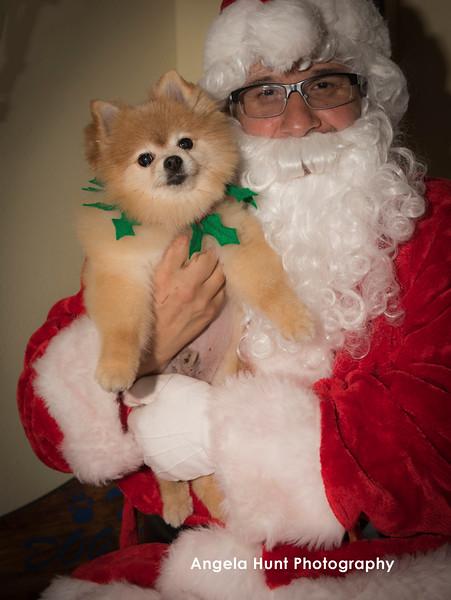 Santa Paws 2015 (The Dog House)