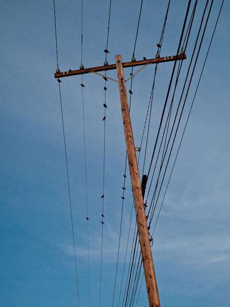 jan31-birds.jpg
