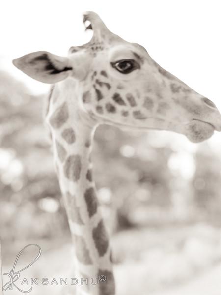 Safari-Africans-129.jpg