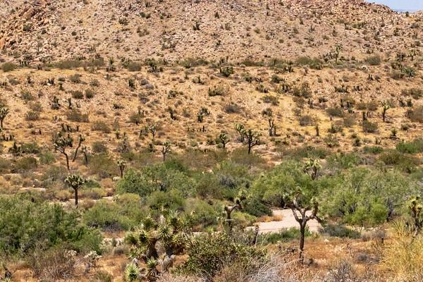 Joshua Tree National Park July 2019