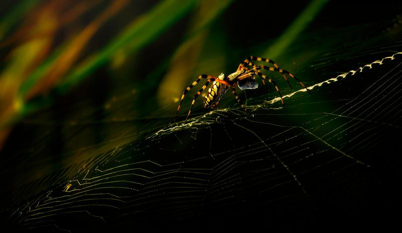 Spiders-Arachnids-153.jpg