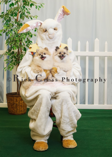 Pets with Easter Bunny March 25, 26 2017