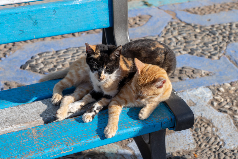 Cats in Chefchaouen, Morocco