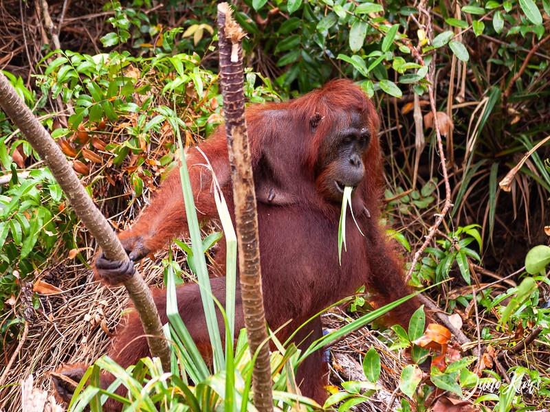 2012.10.07_Borneo_DSC_7384-Juno Kim.jpg