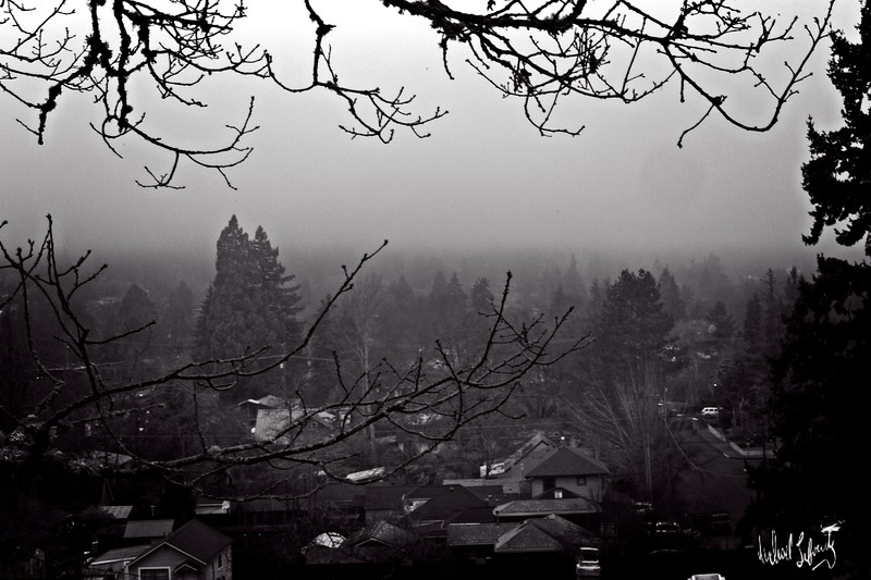 valley fog with branch  b&w.2020 copy