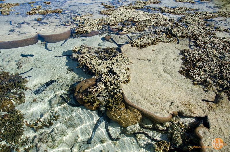 Australia-queensland-Lady Elliot Island-6183.jpg
