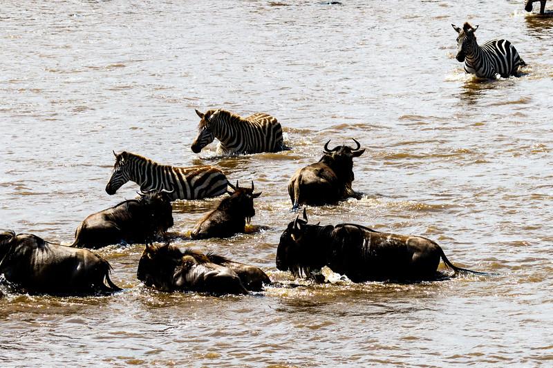 Kenya 2015-06784.jpg