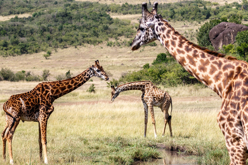 Kenya 2015-04368.jpg