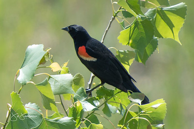 Mostly Birds Around Parkview Villas 2021